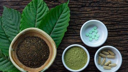 Kratom : une plante asiatique antidouleur entraîne 91 décès aux États-Unis