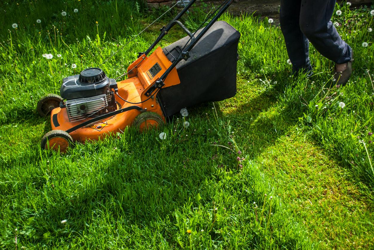 Eloigner Les Fourmis Au Jardin eliminer les tiques du jardin sans pesticides | santé magazine