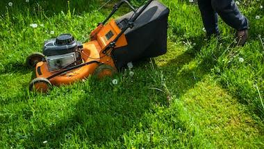 Eliminer les tiques du jardin sans pesticides