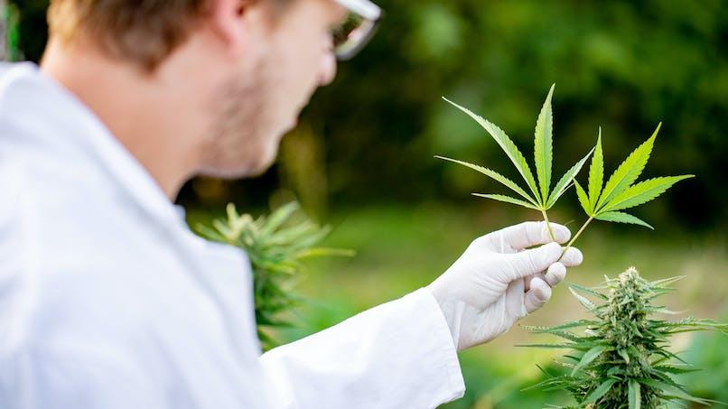 Plus de neuf Français sur dix favorables au cannabis thérapeutique