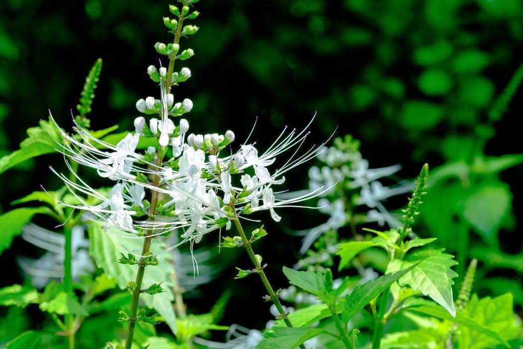 plante drainante retention d 39; eau)