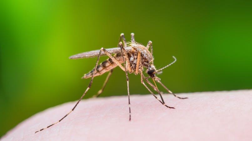 Réchauffement climatique : il va exposer 1 milliard de personnes à la dengue, au zika...