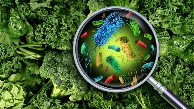 Anxiété : la régulation du microbiote intestinal aiderait à l'atténuer