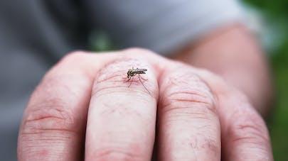 6 signes d'allergie aux piqûres de moustique