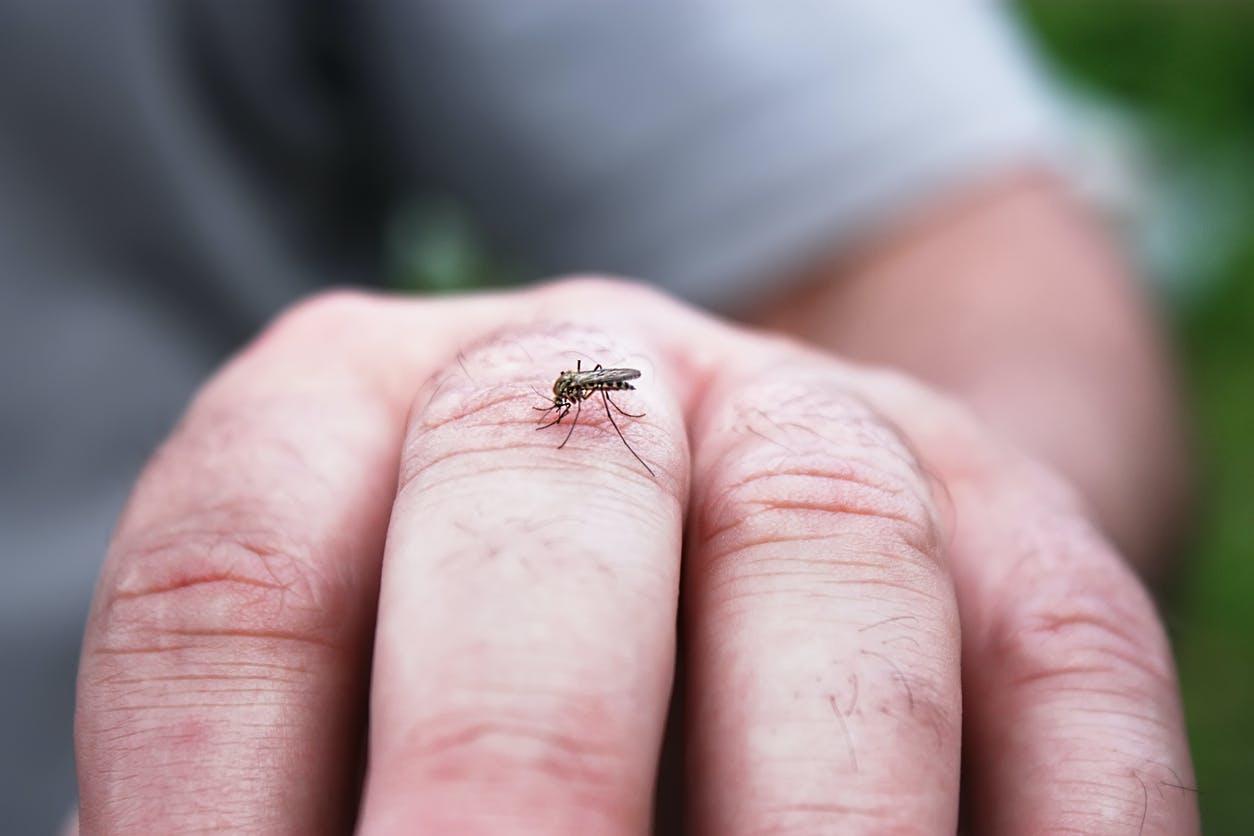 6 signes d'allergie aux piqûres de moustique | Santé Magazine