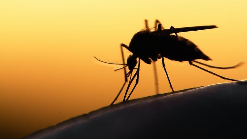 Comment se transmet le paludisme ?