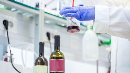 Dépression, anxiété : un composé du vin rouge pourrait aider à les traiter