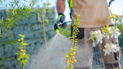 Pesticides : cinq grandes villes les interdisent sur leur territoire