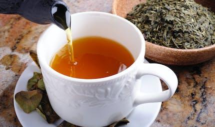 Le thé vert, un atout pour réduire les résistances antibiotiques ?