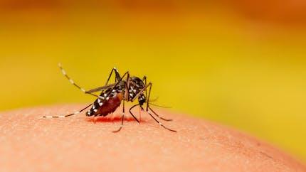 Var : un 3e cas de virus Zika signalé, une enquête lancée mi-novembre