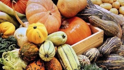 Citrouilles et autres courges d'automne : attention au risque d'intoxication