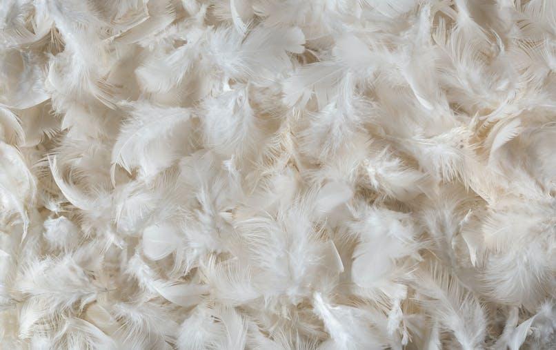 La literie en plumes pourrait engendrer des problèmes pulmonaires