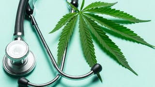 Cannabis thérapeutique : une première expérimentation en septembre 2020