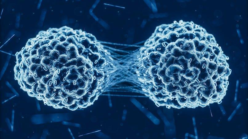 Comment se propagent les métastases dans un cancer?