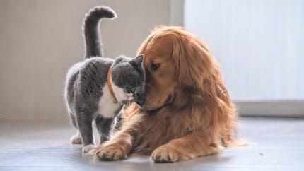 Comment gérer le confinement avec son animal de compagnie ?