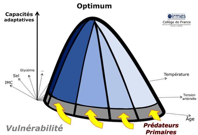 Schéma de vulnérabilité covid-19