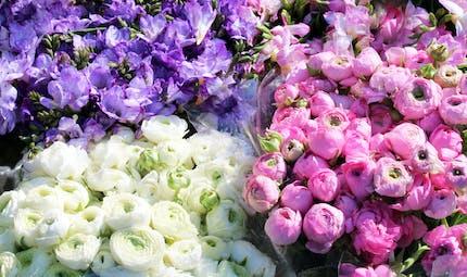 Quelle fleur pour dire je t'aime un peu, beaucoup, à la folie, pas du tout ?