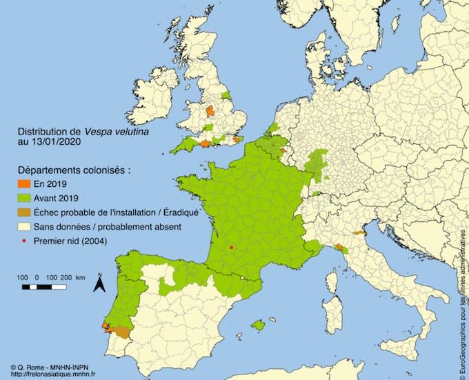 Progression du frelon asiatique en Europe au cours de l'année 2019
