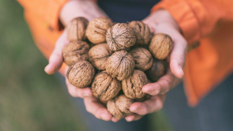 Manger des noix pour vivre plus longtemps?