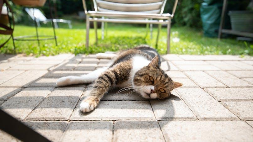 Canicule : bien protéger son chat ou son chien de la chaleur