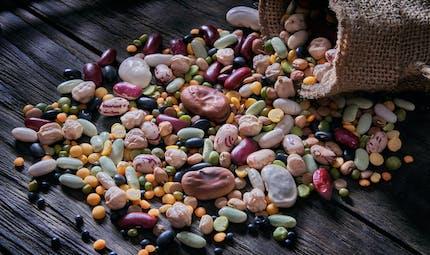 La consommation de protéines végétales pourrait augmenter l'espérance de vie