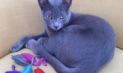Mon chat a de l'eczéma : que faire ?
