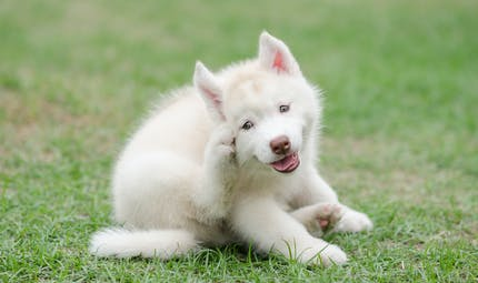 Mon chien a de l'eczéma : que faire ?