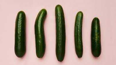 La taille du pénis idéal pour les femmes