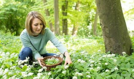 Cueillette de plantes au jardin ou en pleine nature : les conseils de l'Anses pour éviter une intoxication