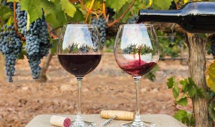 Qu'est-ce qu'un vin bio?