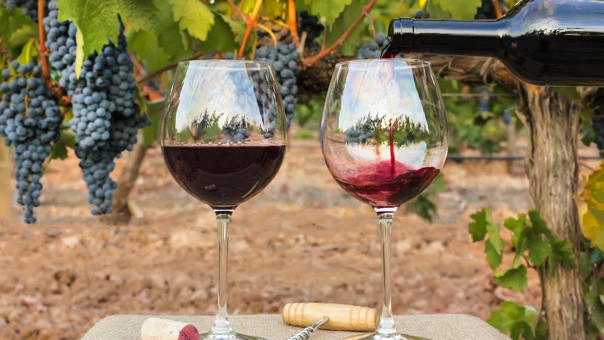 Qu'est-ce qu'un vin bio ?