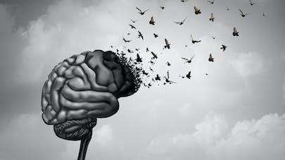Déclin cognitif : et si la greffe fécale faisait partie de la solution ?