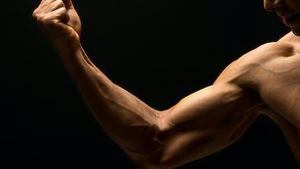 Une caractéristique anatomique du bras montre que l'Homme continue d'évoluer