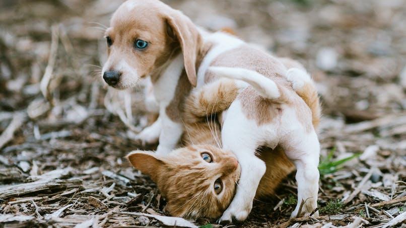 La teigne chez le chat et le chien : la reconnaître, la traiter