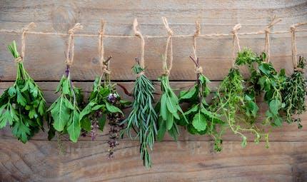 Les plantes médicinales : un avenir prometteur ?