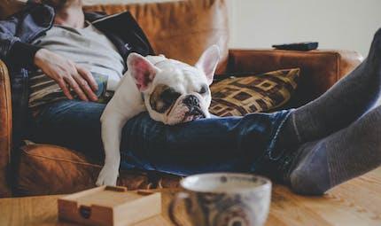 Risque de diabète : tel maître, tel chien, suggère une étude