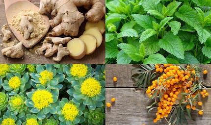 Phytothérapie: les plantes les plus efficaces contre la fatigue