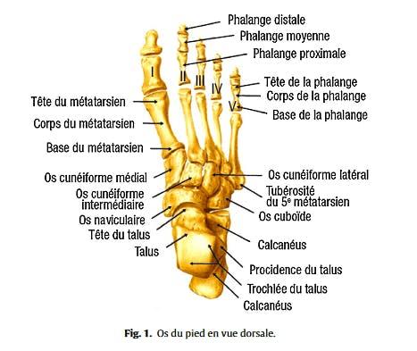 Os du pied humain