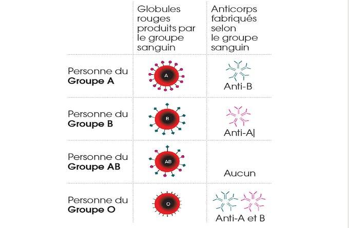 Notre groupe sanguin influence-t-il notre état de santé ?