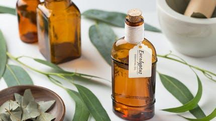 L'huile essentielle d'eucalyptus citronné, bonne pour les douleurs articulaires