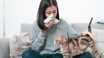 Une nouvelle approche d'immunothérapie pour traiter l'allergie au chat
