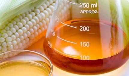 Le fructose est-il dangereux pour la santé?