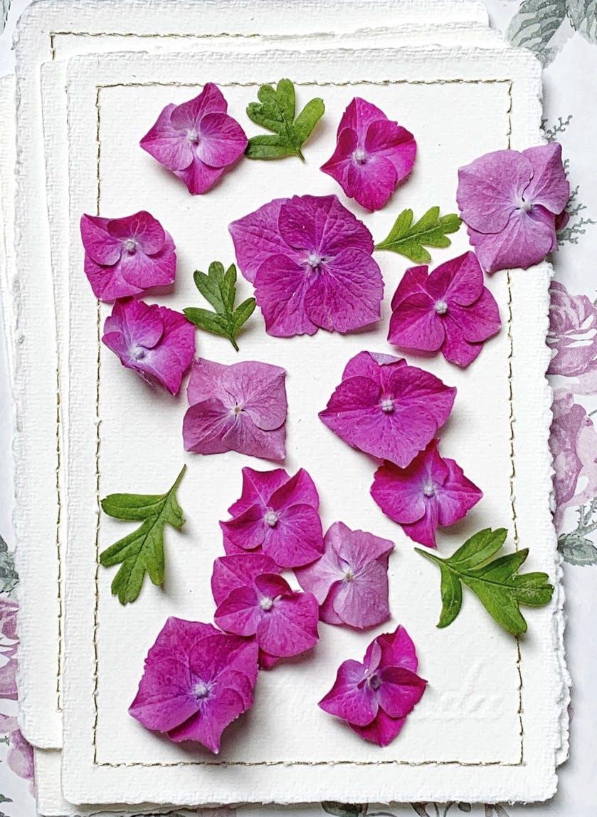 Un tableau de fleurs d'hortensia