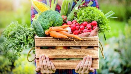 Où faire ses courses pour manger local et bio en toute confiance ?