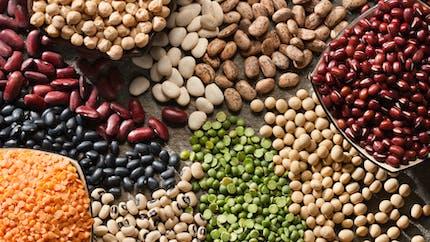 Combiner une alimentation à base de plantes et un microbiome sain peut protéger contre la sclérose en plaques