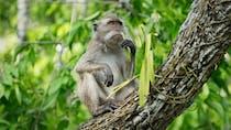 Herpès B du singe : quel est ce nouveau virus mortel ?