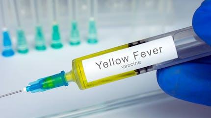 Qu'est-ce que la fièvre jaune ? comment la prévenir ?