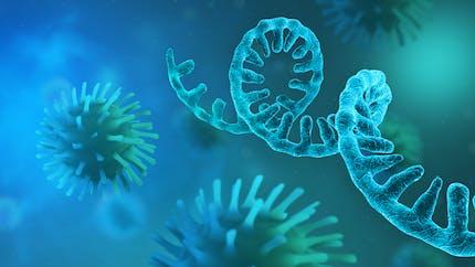 Qu'est-ce que l'ARN messager ? Comment fonctionne-t-il ? Quelles limites ?