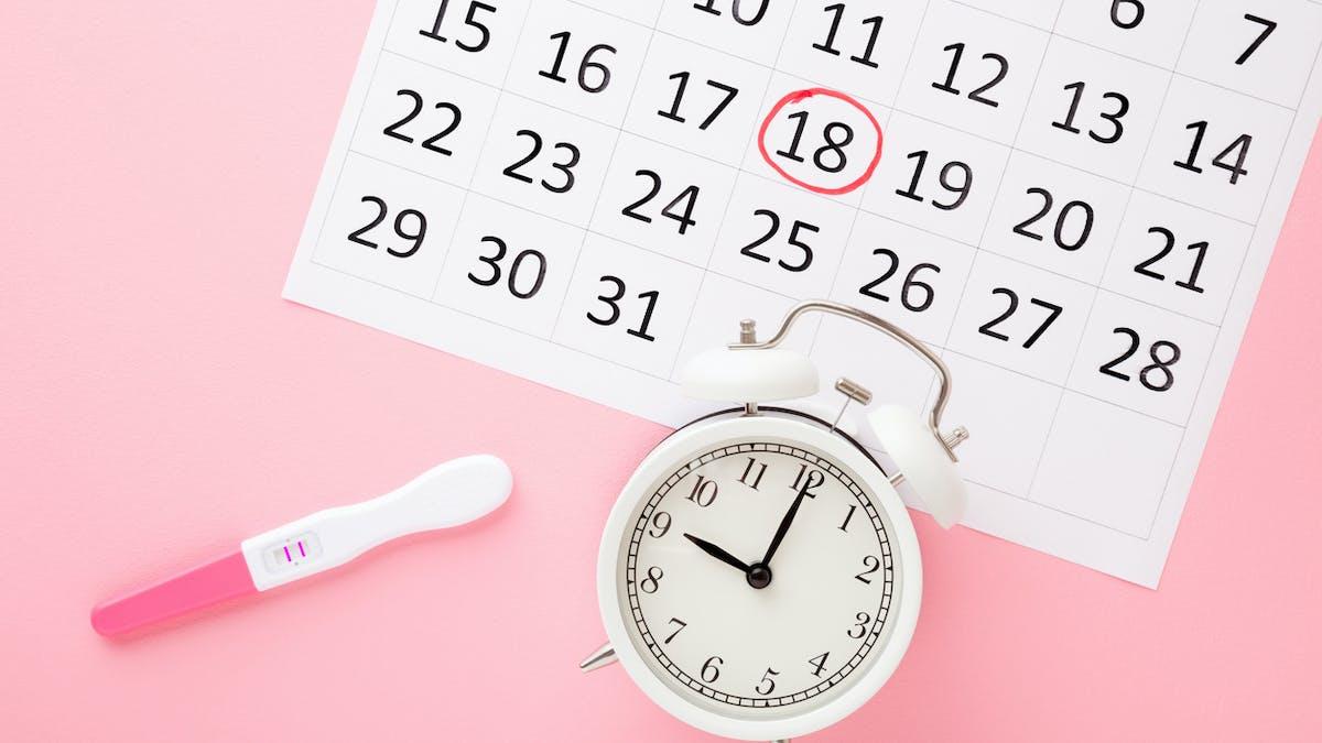 Calculer sa période d'ovulation