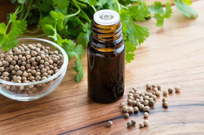 huile essentielle de coriandre
